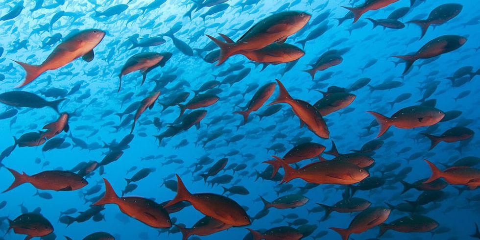Resultado de imagem para fish