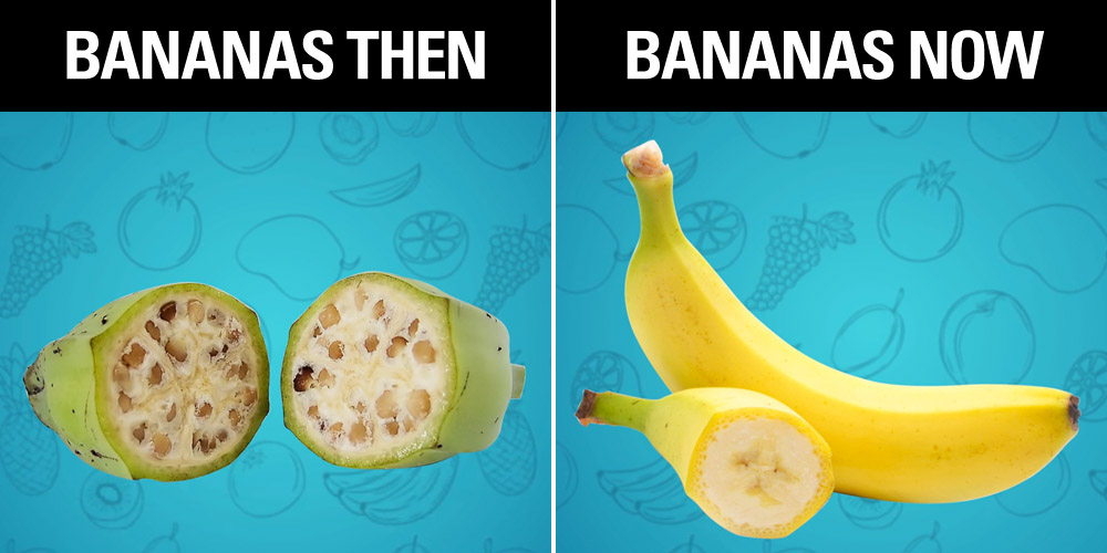 These Pictures of What Your Favorite Fruits Used to Look ...