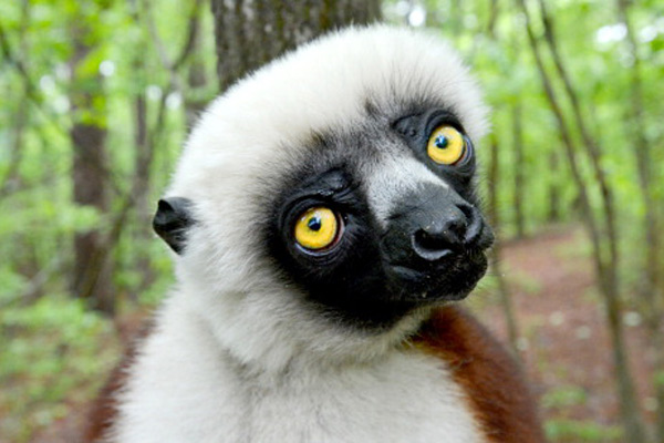 Zoboomafoo Died - PBS Children's Show Zoboomafoo Lemur ...